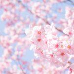 花粉症でも「エア花見」で盛り上がろう!